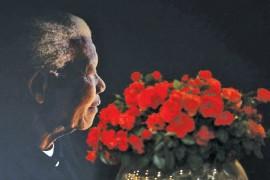 «وردة نلسون مانديلا»... في عيد الحب